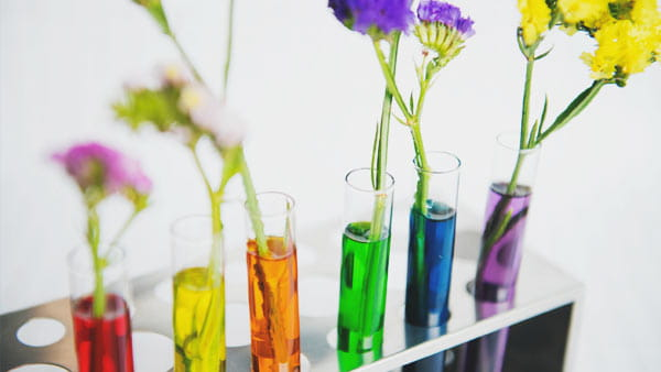 test tubes with different water color and flowers